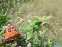 vlinderverblijf in blad Stock Afbeelding