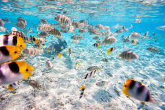 Vlindervissen Royalty-vrije Stock Afbeeldingen