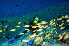 Vlindervissen terwijl vrij duiken in de Maldiven Royalty-vrije Stock Afbeelding