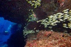 Vlindervissen terwijl vrij duiken in de Maldiven Stock Foto
