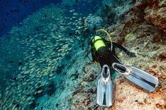 Vlindervissen terwijl vrij duiken in de Maldiven Stock Fotografie