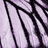 Vlindervleugel royalty-vrije stock afbeelding