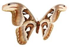 Vlindervleugels op een witte achtergrond Royalty-vrije Stock Foto