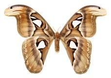 Vlindervleugels op een witte achtergrond Stock Foto