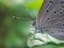 Vlindervlinder royalty-vrije stock foto