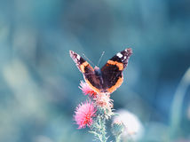 Vlinderzitting op bloemen met weerhaken in de zomer op een Zonnige meado stock foto's