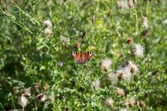 Vlinderzitting op bloesems van bloemen in de zon Royalty-vrije Stock Afbeeldingen