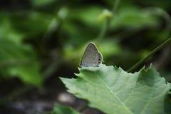 Vlinderzitting op een blad stock afbeelding