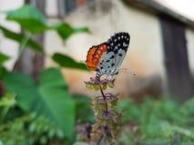 Vlinderzitting op een installatie in een tuin stock afbeelding