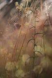 Vlinderzitting op een tak Stock Foto