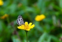 Vlinderzitting op geel bloemgras in de weide stock afbeelding