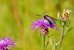 Vlinderzitting op het gras Stock Afbeeldingen