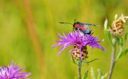 Vlinderzitting op het gras Stock Afbeelding