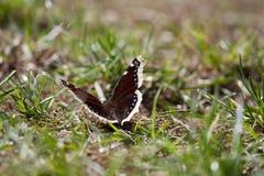 Vlinderzitting ter plaatse in de zon Stock Foto