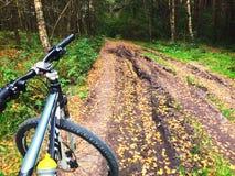 Vélo de montagne sur la traînée de forêt Photo stock