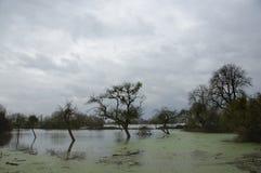 Vloed in Burrowbridge Somerset Levels het UK 2014 stock foto's