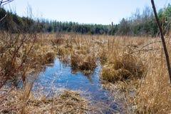 Vloed in de lentemoerassen Royalty-vrije Stock Afbeeldingen
