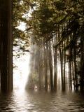 Vloed in het bos Stock Foto's