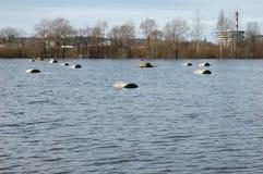 Vloed op rivier bij de lente Royalty-vrije Stock Afbeeldingen