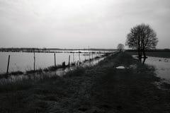 Vloed op zwart-witte weide - Stock Foto