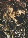 Vloeibaar goud Stock Foto's
