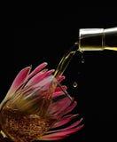 Vloeibare Zonneschijn die Protea gieten Royalty-vrije Stock Foto's