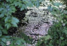 Vloeiende Rivier door Ontworpen Bladeren Royalty-vrije Stock Foto's