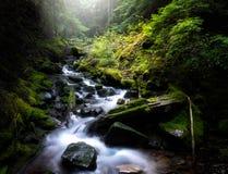 Vloeiende stroom door groen bemost bos royalty-vrije stock afbeeldingen