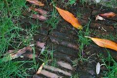 Vloer in tuin Royalty-vrije Stock Fotografie