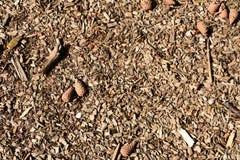 Vloer van een pijnboombos in Engeland Stock Fotografie