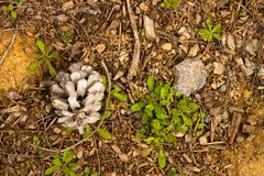 Vloer van het bos Stock Foto's