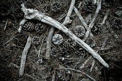 Vloer van pijnboomhout Royalty-vrije Stock Foto