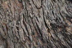 Vloerschilderijen na Natuurlijke aard het concept communautaire fotografie Natuurlijke Reis royalty-vrije stock foto's