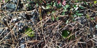 Vloertextuur met droog gras royalty-vrije stock foto's