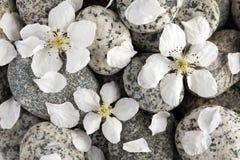 Vlotte stenen met bloemblaadjes Stock Foto