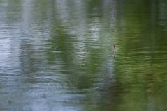 Vlotter voor visserij op het water stock foto