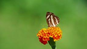 Vlotter zoals een vlinder, steek zoals een bij Camera slt-A58 ISO 200 royalty-vrije stock afbeeldingen