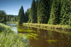 Vltava flod - nationalparken Sumava Arkivbild