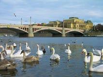 Vltava Fluss, Prag, Tschechische Republik Lizenzfreie Stockfotos