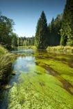 Vltava river -  the national park Stock Photos