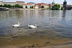Vltava River in Prague Royalty Free Stock Photos