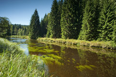 Vltava rzeka - park narodowy Sumava Fotografia Stock