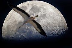Vlucht aan de maan Royalty-vrije Stock Fotografie