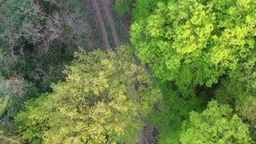Vlucht boven bosweg tijdens lentetijd, hommeltop down mening, 4K stock videobeelden