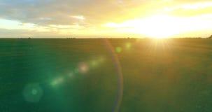 Vlucht boven landelijk de zomerlandschap met eindeloos geel gebied bij zonnige de zomeravond Landbouwlandbouwgrond bij de herfst stock videobeelden