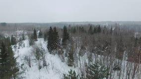 Vlucht boven snow-covered open plek naar pijnbomen en sparren in bewolkte dag stock footage