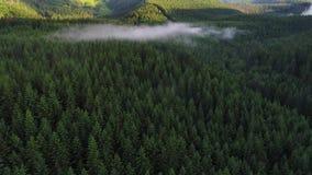 Vlucht over bos in bergen stock video