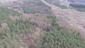 Vlucht over de bomen stock video