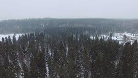 Vlucht over de bovenkanten van sparren en pijnbomen op bewolkte dag met zware sneeuwval stock video