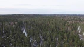 Vlucht over de bovenkanten van sparren, pijnbomen en sparren bij heldere duidelijke dag stock footage